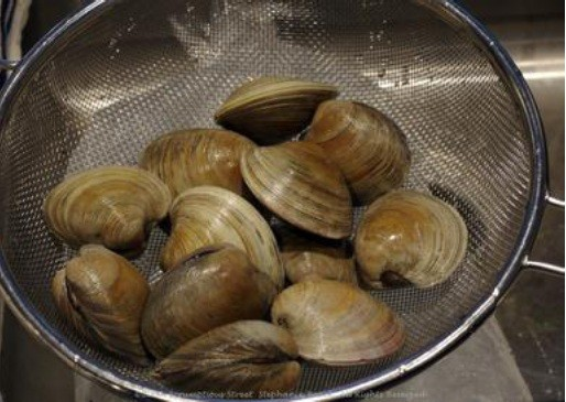 Sample of clams in their shells